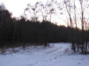 Sprzedam ziemię (las, łąka, pole orne) + zabudowania - zdjęcie 1