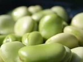 Nasiona bobu bób Bizon - zdjęcie 1