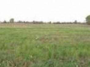Trzeciewiec obok Bydgoszczy, Działka rolna, 4 000 m2 Cena : 145 000 PLN Gmina Dobrcz sprzedam tel. 661745738 - zdjęcie 1