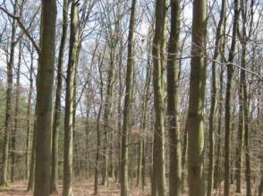 Sprzedam las w woj. Lubuskim - zdjęcie 1