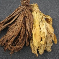 Sprzedam liscie tytoniu po 11 hurt po 20 detal I klasa - zdjęcie 1