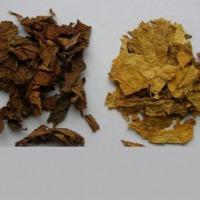 liscie tytoniu - zdjęcie 1