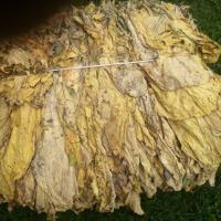 Na sprzedaż liście tytoniu Virginia - zdjęcie 1