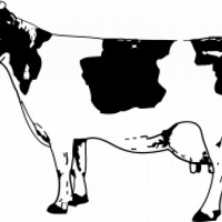 Korekcja Racic u Bydła - zdjęcie 1