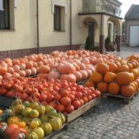 Sprzedam dynie jadalne różne odmiany, hallowee i ozdobne oraz warzywa - zdjęcie 1