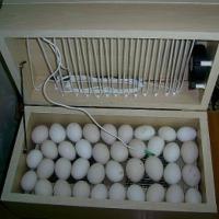 inkubator wylegarka  - zdjęcie 1