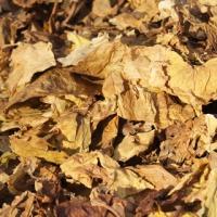 Liście tytoniu - CAŁA POLSKA - 535 911 831 - zdjęcie 1