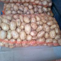 Kupię ziemniaki czerwone np bellarosa +50 +55 - zdjęcie 1