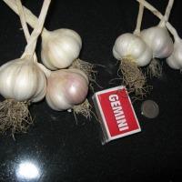 Sprzedam czosnek wiosenny z własnej plantacji !!!  - zdjęcie 1