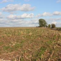 Sprzedam działki rolno-budowlane (siedliskowe) w miejscowości Poczernin (okolice Stargardu Szczec.) - zdjęcie 1