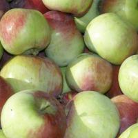 Kupię jabłko przemysłowe (suchy przemysł), na mus - zdjęcie 1