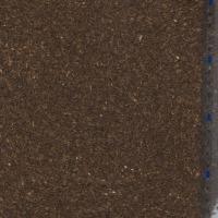 Sprzedam nasiona kopru - zdjęcie 1
