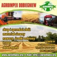 Firma AGROIMPEX kupi każdą ilość GRYKI,PROSA,ŁUBINU oraz BOBIKU. - zdjęcie 1