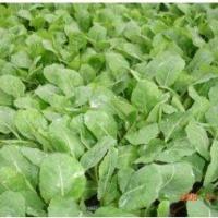Rozsada warzyw - zdjęcie 1
