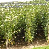 Drzewka Owocowe - zdjęcie 1