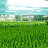 Krzewy ozdobne- ponad 200 odmian - zdjęcie 1