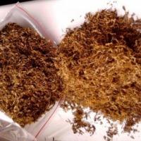najlepsze tytonie ! - zdjęcie 1