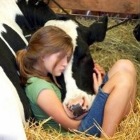 Ukraina.Krowy,jalowki,mleko 3,5%.Cena 0,90 zl/litr - zdjęcie 1