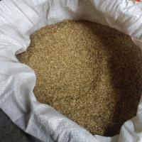 Sprzedam nasiona kopru! Koper - zdjęcie 1