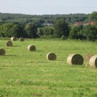 Oddam odpłatnie łąki do wykoszenia, czyli sprzedam siano na pokosie.   Produktem sprzedaży jest mieszanka traw z koniczyną, wysiana na gruntach rolnych dobrej klasy, których uprawa prowadzona jest w wysokiej  kulturze rolnej.  TRAWY Z KONICZYNĄ  dają wyso - zdjęcie 1