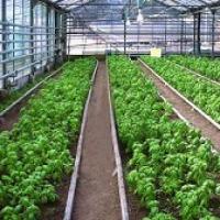 Ukraina.Gleby pod uprawe drzew owocowych,ogorka,pomidorow w gruncie 6000ha.Sprzedaz,wynajem - zdjęcie 1
