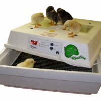 Best Egg Incubators Leleka - zdjęcie 1