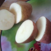 Ziemniaki Bellarosa i Dżeli - zdjęcie 1