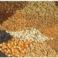 Ukraina.Nasiona,nawozy,artykuly do produkcji rolnej - zdjęcie 1
