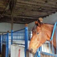 Stadnina koni Bronków - zdjęcie 1