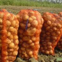 Ukraina.Warzywa,ziemniaki 0,25 zl/kg.Grunty rolne 150 zl/ha.Oferujemy na sprzedaz,wynajem opuszczony kompleks 5 budynkow po bylej krochmalnie.Spoldzielnia ogrodnicza,zaklad przetworstwa skrobi ziemniaczanej na terenie 2ha.Z mozliwoscia dokupienia,wynajmu - zdjęcie 1