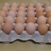 Duże jaja wiejskie  - zdjęcie 1