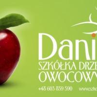 Drzewka owocowe - Szkółka Daniel - zdjęcie 1