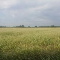 Kupię ZIEMIĘ GRUNTY ROLNE cała Polska  - zdjęcie 1
