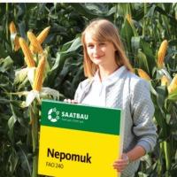 Kukurydza nasiona NEPOMUK NOWOSC - zdjęcie 1