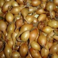 Cebula Dymka Rózne odmiany i kalibry Certyfikaty Import - zdjęcie 1