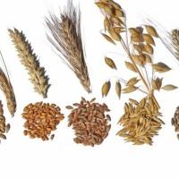 Skup zbóż - własny odbiór  - zdjęcie 1