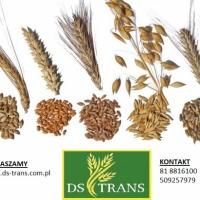 Skup zbóż paszowych-cena do uzgodnienia - zdjęcie 1