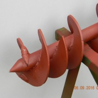 żmijka żmijka - zdjęcie 1