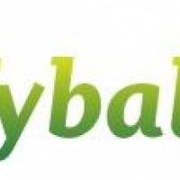 Pszenica Tybalt -przewódki nasiona kwalifikowane  C1 - zdjęcie 1
