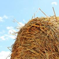 Kupię słomę, siano, kiszonkę z kukurydzy - zdjęcie 1