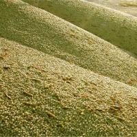 Pasza granulowana w workach, premiksy zbilansowane 400 zl/tona, do negocjacji. Produkcja granulatu z pasz sypkich i biomasy. Skladniki: jeczmien, pszenzyto, kukurydza, otreby pszenne. Mieszanki objetosciowe soczyste, sianokiszonka pelnoporcjowa, melasa, k - zdjęcie 1